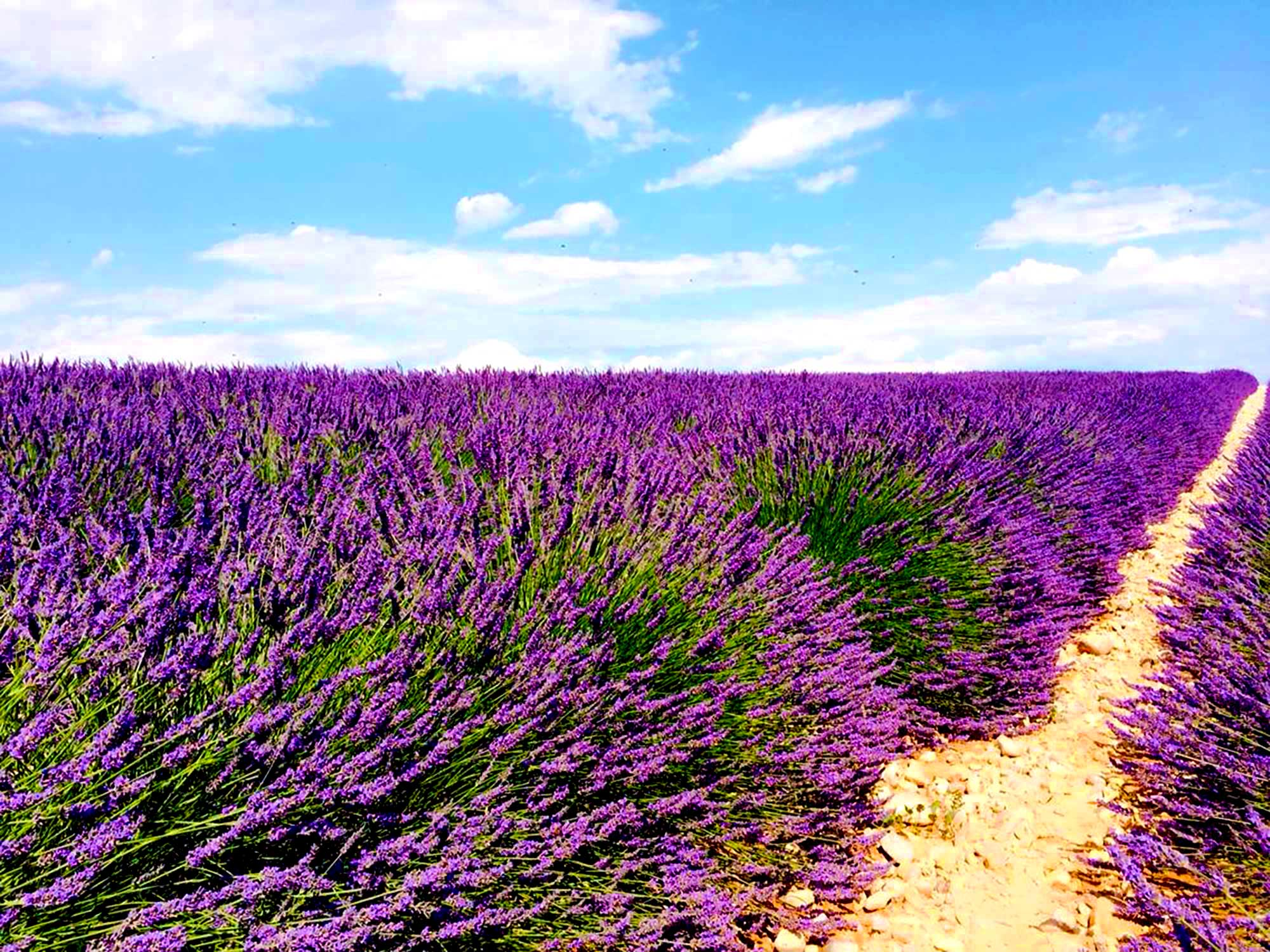 Lavender In Provence graphy Retreat July 5 9 2017 La Belugue
